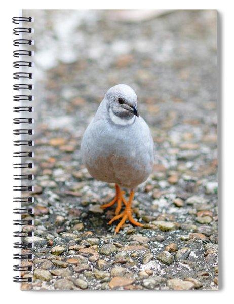 White Bird Sneaking Through Spiral Notebook