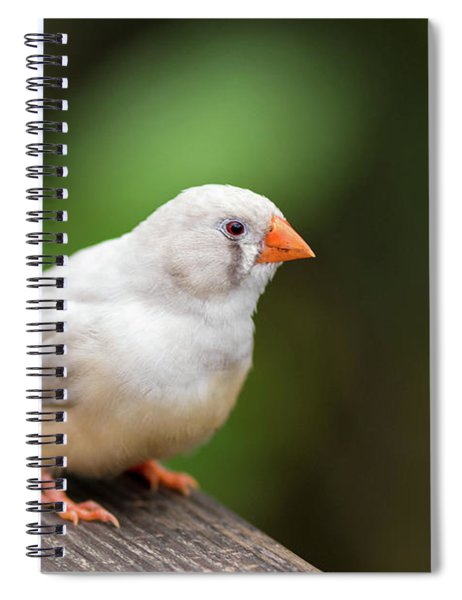 White Bird Standing On Deck Spiral Notebook