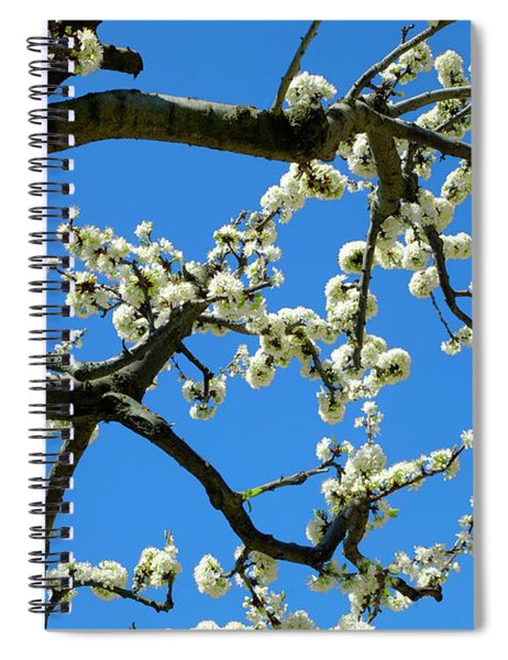 White Blossom Branches Spiral Notebook