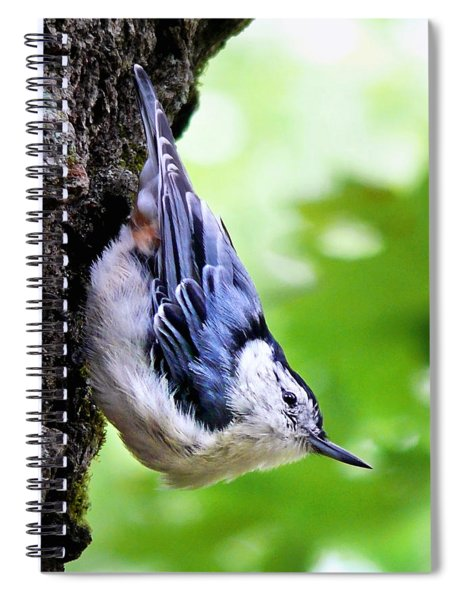 White Breasted Nuthatch Spiral Notebook