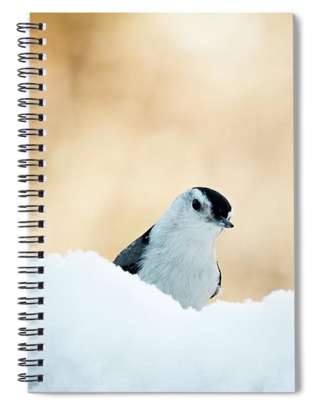 White Breasted Nuthatch In Snow Spiral Notebook