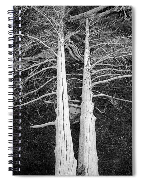 White Dead Trees Spiral Notebook