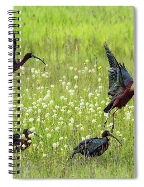 White-faced Ibis Rising, No. 1 Spiral Notebook