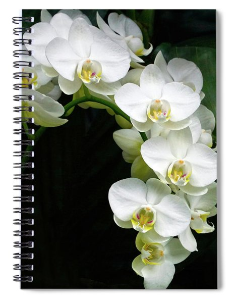 White Moth Orchid Array Spiral Notebook