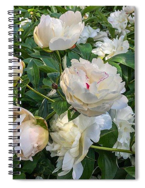 White Peonies In North Carolina Spiral Notebook