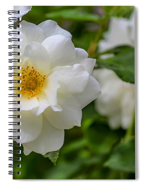 Spiral Notebook featuring the photograph White Rose by Alison Frank
