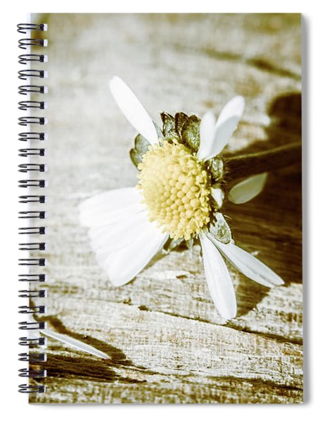 White Summer Daisy Denuded Of Its Petals Spiral Notebook