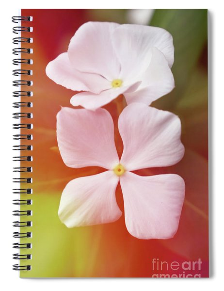 White Vinca With Vivid Highligts  Spiral Notebook