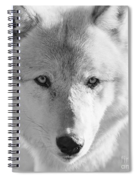 White Wolf Spiral Notebook