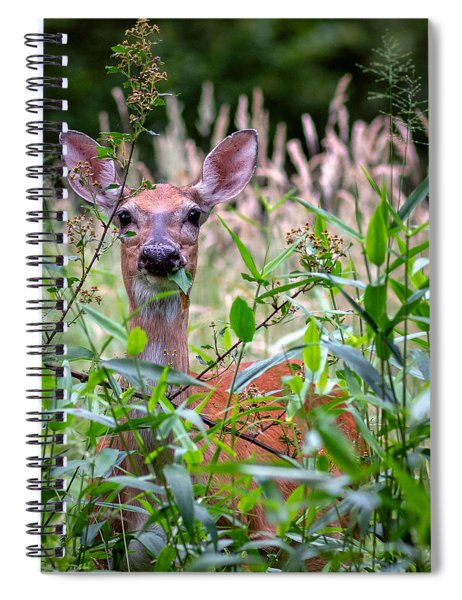 Whitetail Doe Spiral Notebook