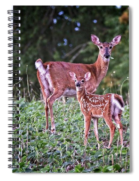 Whitetail Doe With Fawn Spiral Notebook