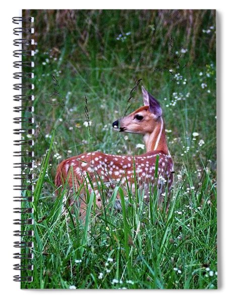 Whitetail Fawn Spiral Notebook