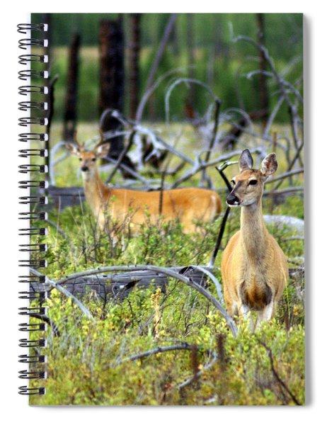 Whitetails Spiral Notebook