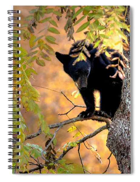 Who Are You Looking At Spiral Notebook