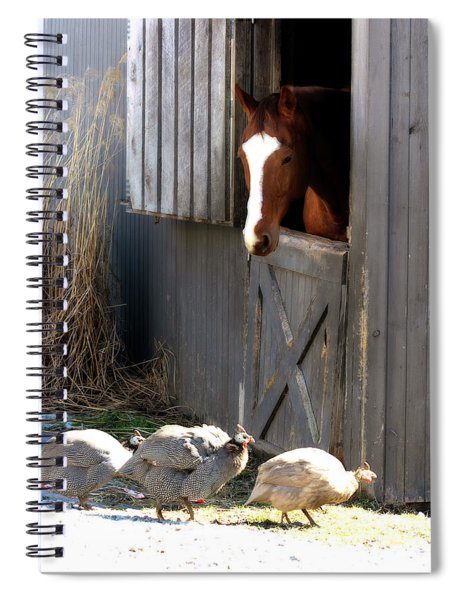 Why Did The Guinea Hen Cross The Road Spiral Notebook