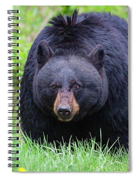 Wild Black Bear Spiral Notebook