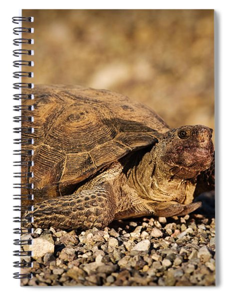 Wild Desert Tortoise Saguaro National Park Spiral Notebook