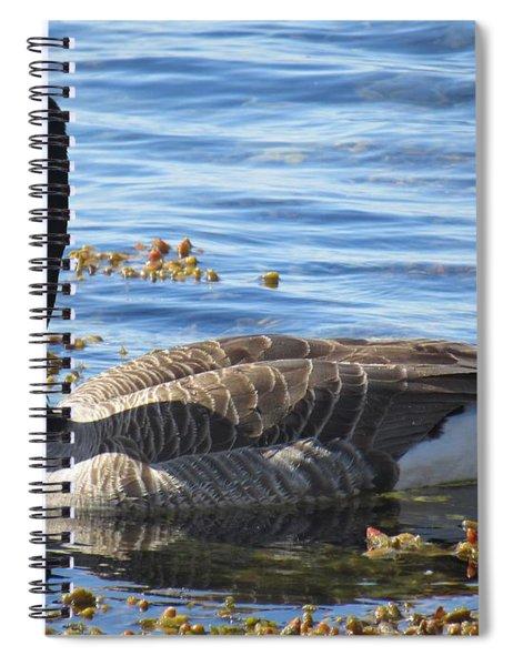 Wild Goose In Stendorren Spiral Notebook