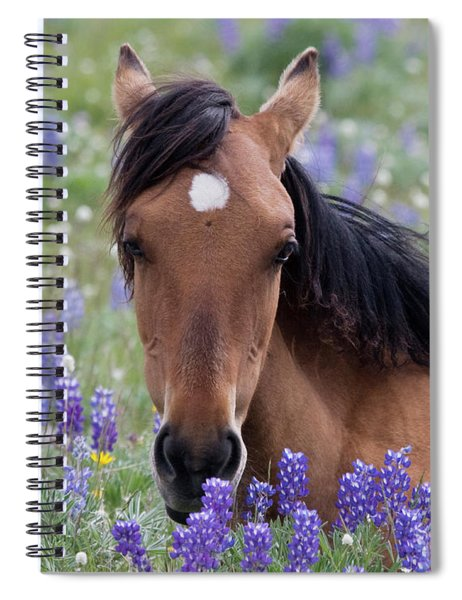 Wild Horse Among Lupines Spiral Notebook