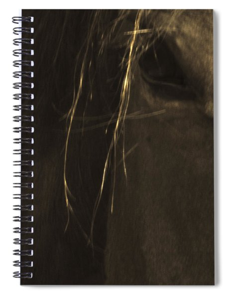 Wild Mustangs Of New Mexico 43 Spiral Notebook
