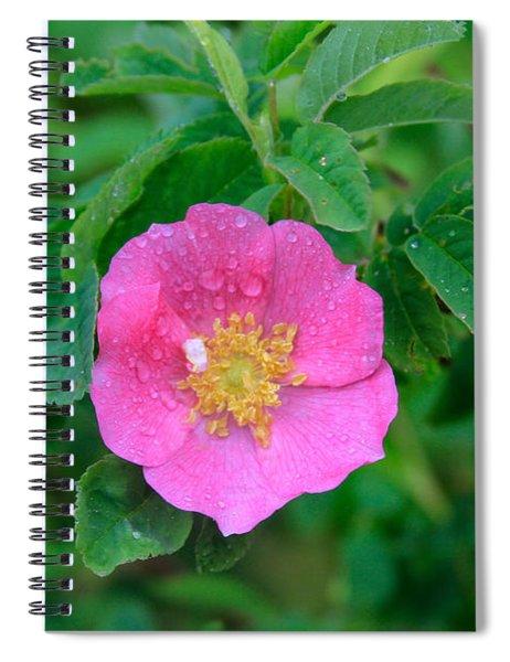Wild Rose On Green Spiral Notebook