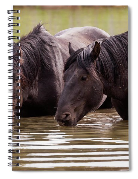 Wild Stallions At The Water Hole Spiral Notebook