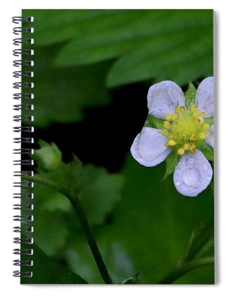Wild Strawberry Blossom And Raindriops Spiral Notebook