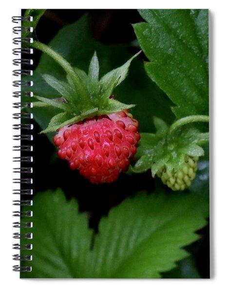 Wild Strawberry Spiral Notebook