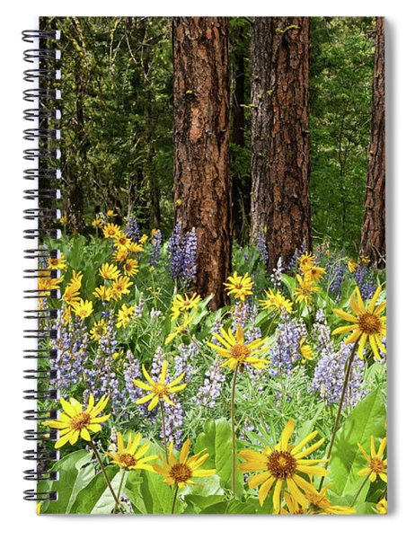 Balsamroot And Lupine In A Ponderosa Pine Forest Spiral Notebook