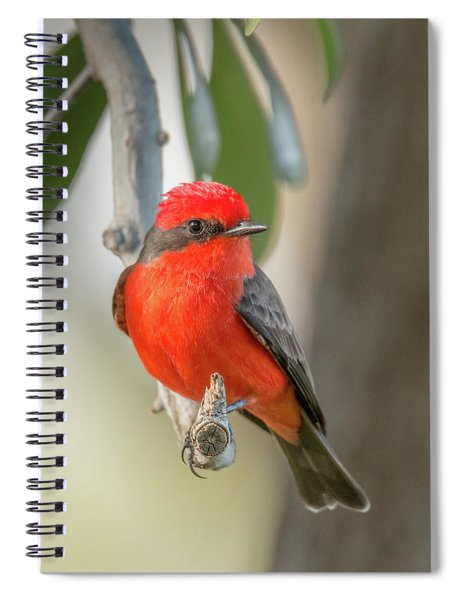 Winged Zorro Spiral Notebook