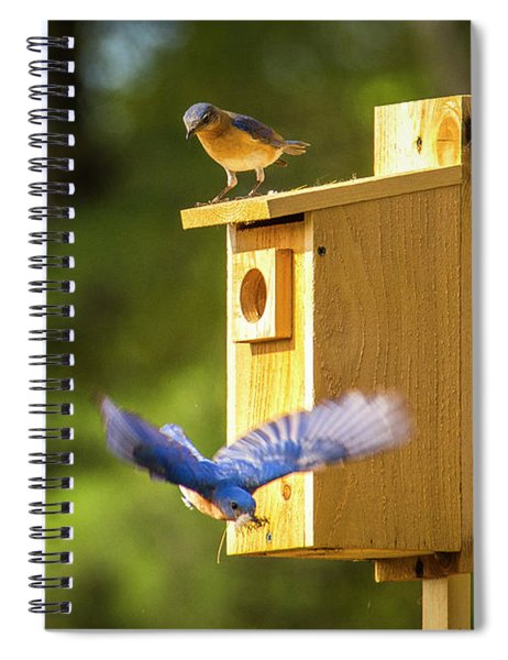Wings Spread Spiral Notebook
