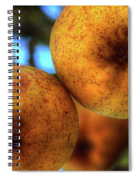 Winter Apples 2 Spiral Notebook