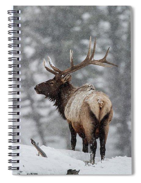 Winter Bull Elk Spiral Notebook