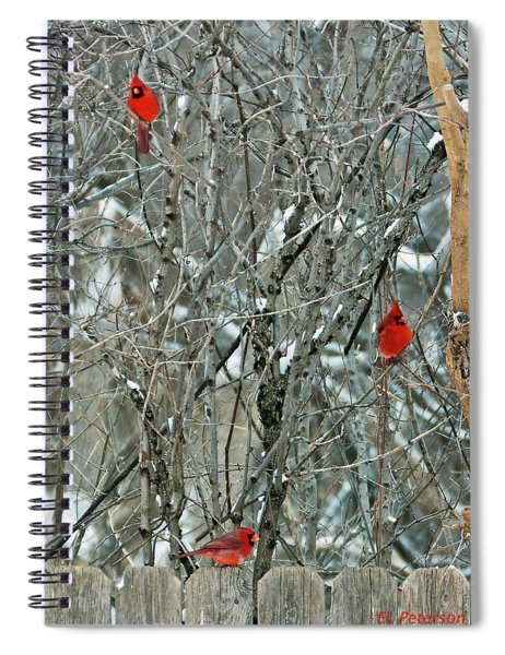 Spiral Notebook featuring the photograph Winter Cardinals by Edward Peterson