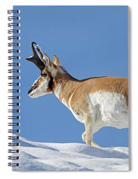 Winter Pronghorn Buck Spiral Notebook