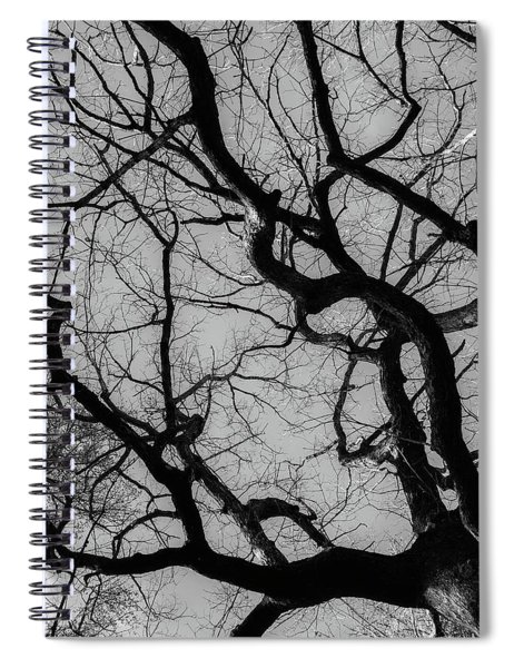 Winter Veins Spiral Notebook