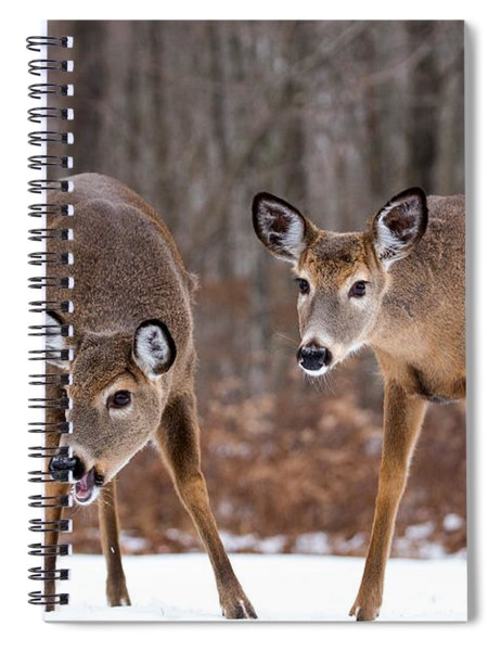 Winter White Tail Deer Spiral Notebook