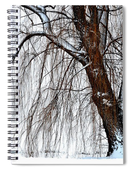 Winter Willow Spiral Notebook