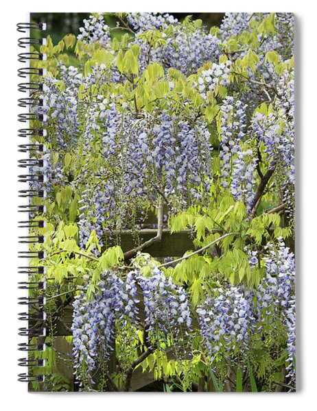 Wisteria Floribunda Multijuga Spiral Notebook