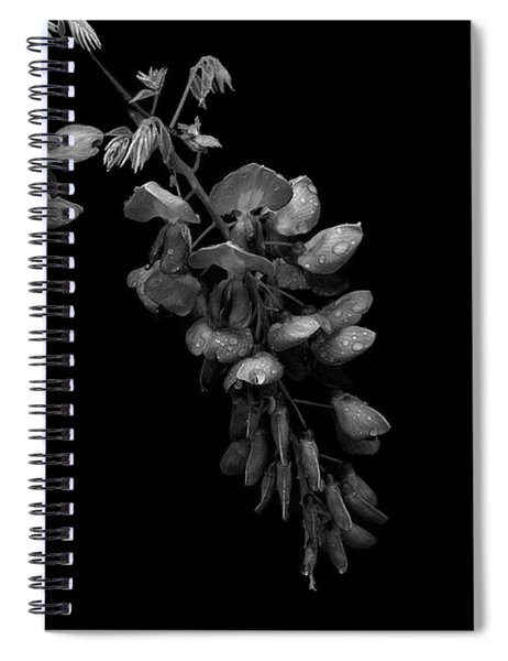 Wisteria Flowers In Black And White Spiral Notebook