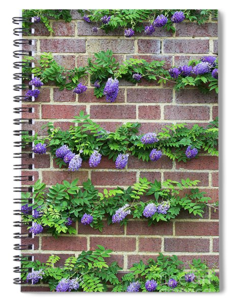 Wisteria Frutescens Longwood Purple Spiral Notebook