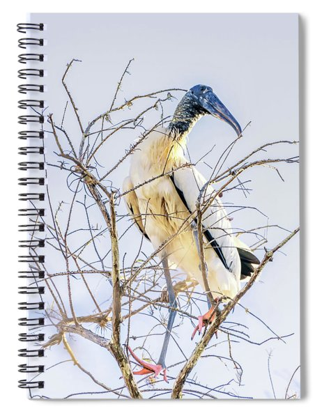 Wood Stork Sitting In A Tree Spiral Notebook