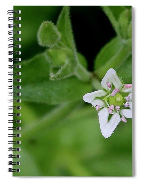Woodland Wildflower Spiral Notebook
