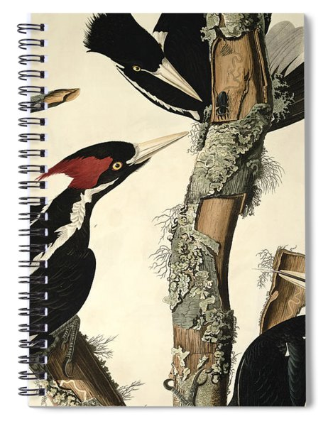 Woodpecker Spiral Notebook