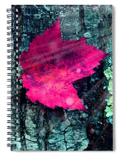 Woods 3 Spiral Notebook