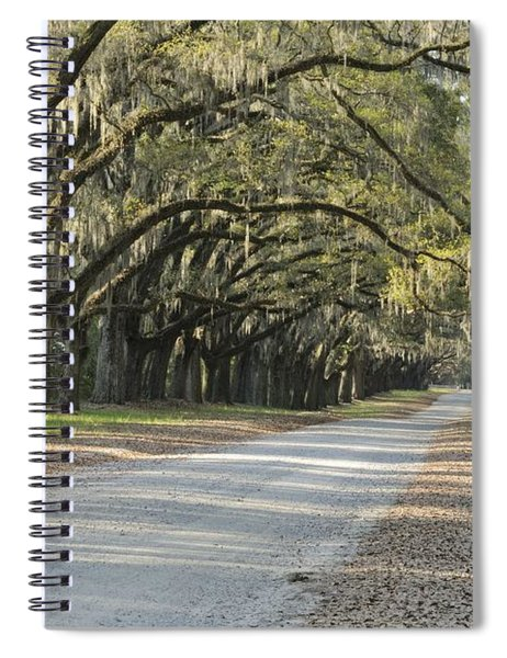 Wormsloe Entrance Road Spiral Notebook