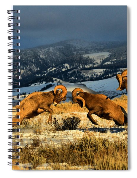 Wyoming Bighorn Brawl Spiral Notebook