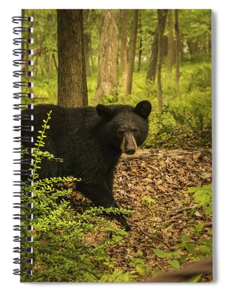 Yearling Black Bear Spiral Notebook