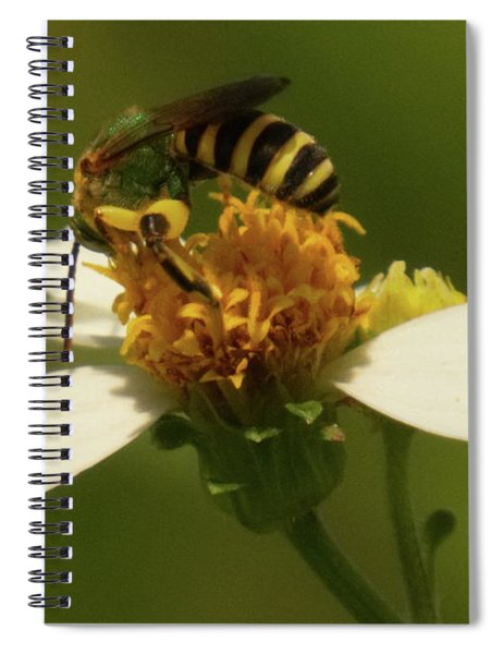 Yellow And Black Bee On Flower. Spiral Notebook