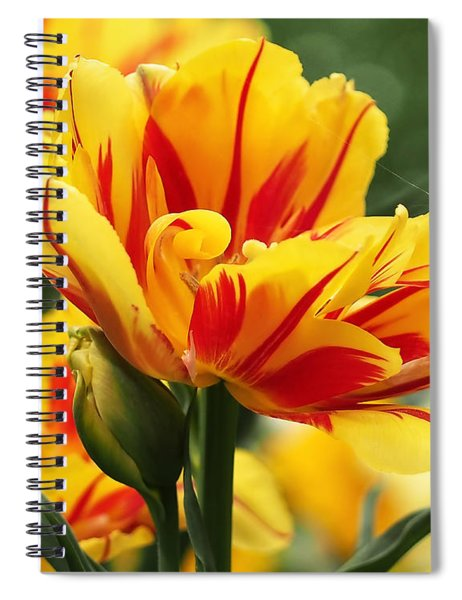 Yellow And Red Triumph Tulips Spiral Notebook